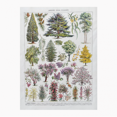 "Illustration Millot ""Jardins (arbres d'ornement)"""